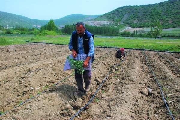 Çiftçilerin sıcak havada zorlu mesaisi