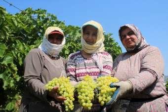 Üzüm işçilerinin yevmiye miktarı belli oldu