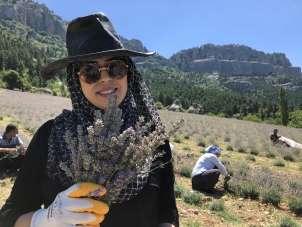 Lavanta üreticisi kadınların hasat heyecanı