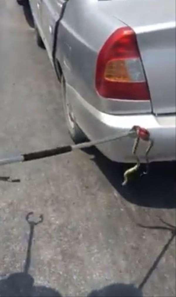 Otomobile giren yılan kazaya neden oldu