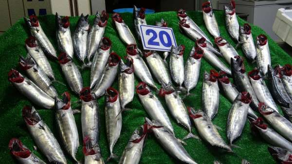 Karadenizde balık bolluğu