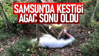 Samsun'da kestiği ağaç sonu oldu