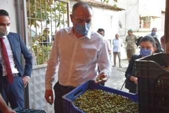 Gemlik Belediyesi zeytin ödemelerine başladı