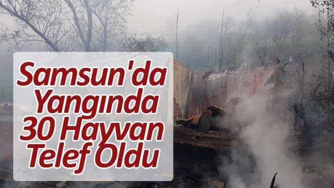 Samsun'da yangında 30 hayvan telef oldu