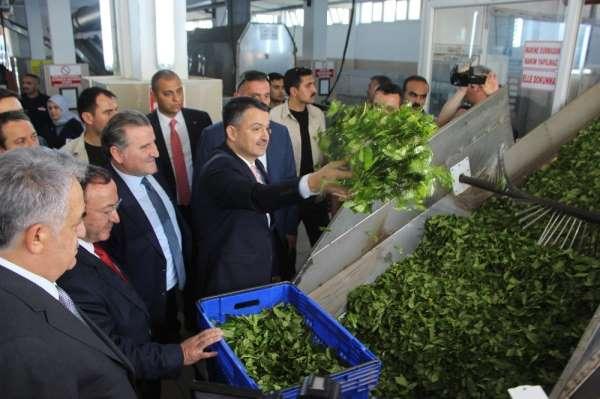 Bakan Pakdemirli Rize'de çay fabrikalarını gezdi