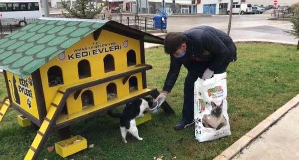 Amasya Belediyesi ekiplerinden sokak hayvanlarına yiyecek
