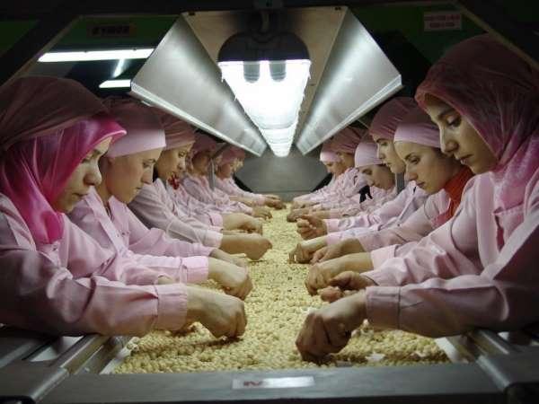 Düzce'den Avrupa'ya 13 milyon kilogram fındık ihraç edildi