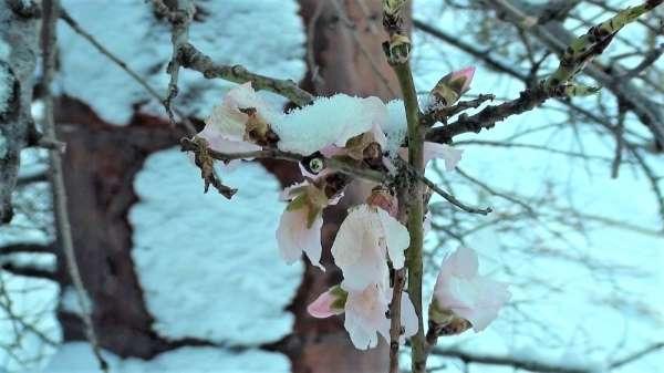 Yalancı bahar meyve ağaçlarını vurdu