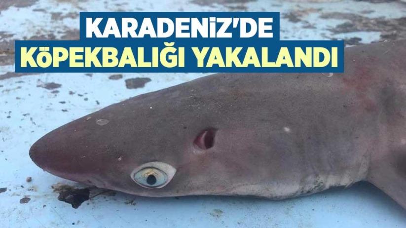 Karadenizde köpekbalığı yakalandı