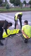 Kazada yaralanan köpeğe trafik polisinden şefkat eli