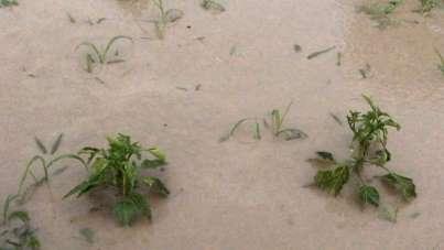 Tokat'ta sağanak tarım arazilerini vurdu