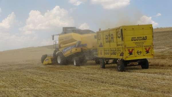 Muş'ta yılın ilk arpa ve buğday hasadına başlandı