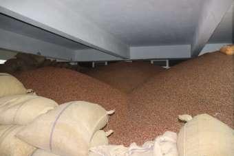 FİSKOBİRLİK fındık alımlarında üreticilerden yoğun ilgi görüyor