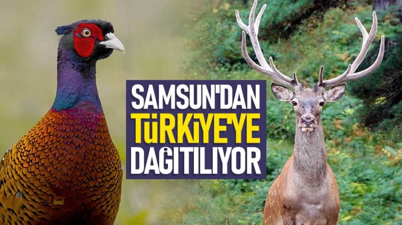 Samsun'dan Türkiye'ye dağıtılıyor