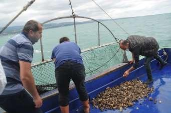 Deniz salyangozu ihracatından 3 milyon dolar gelir