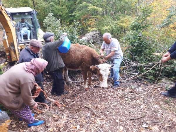 Tokatta kayalıklar arasına düşen inek kurtarıldı