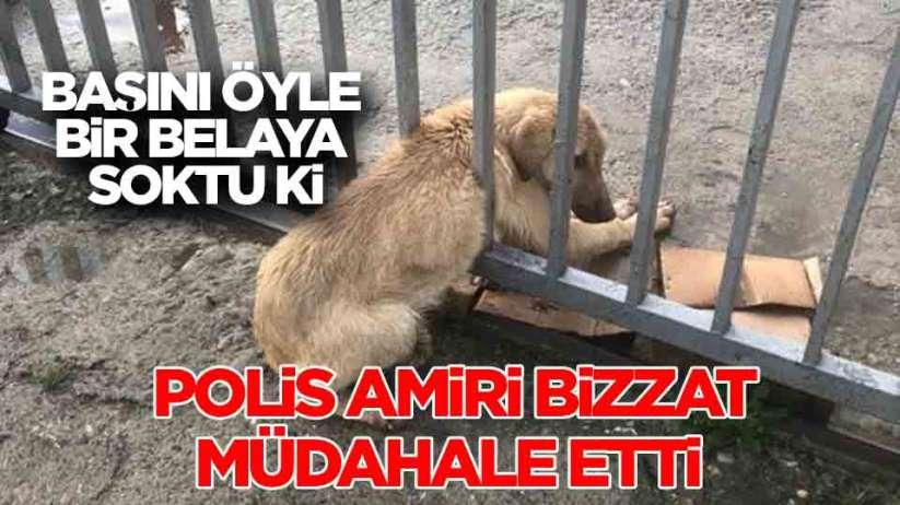 Samsun'da demir parmaklıklara sıkışan köpeği trafik ekipleri kurtardı