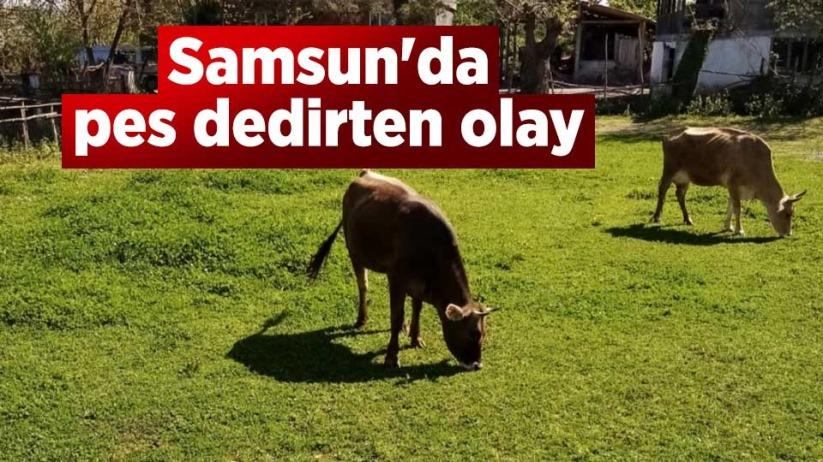 Samsun'da pes dedirten olay
