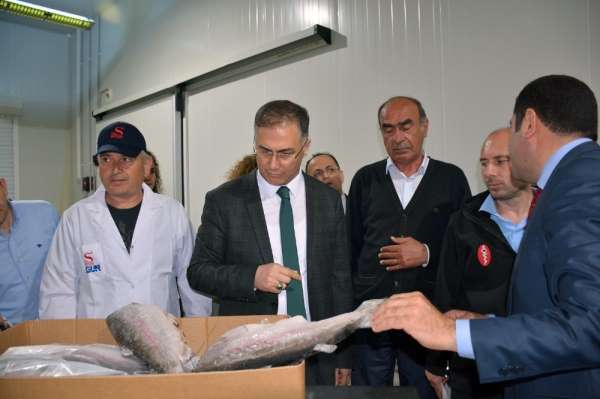 Sinop Valisi Şakalar su ürünleri fabrikalarını gezdi