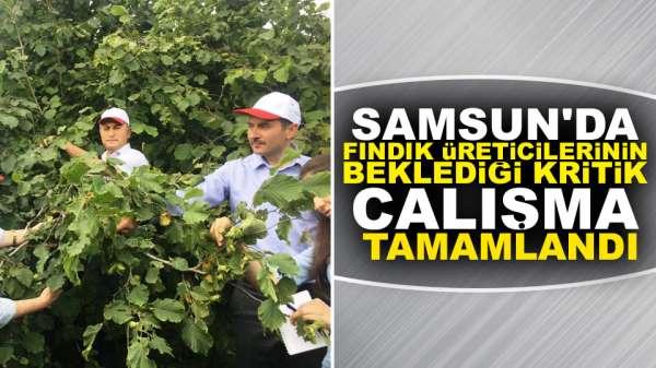 Samsun'da fındık üreticilerinin beklediği kritik çalışma tamamlandı