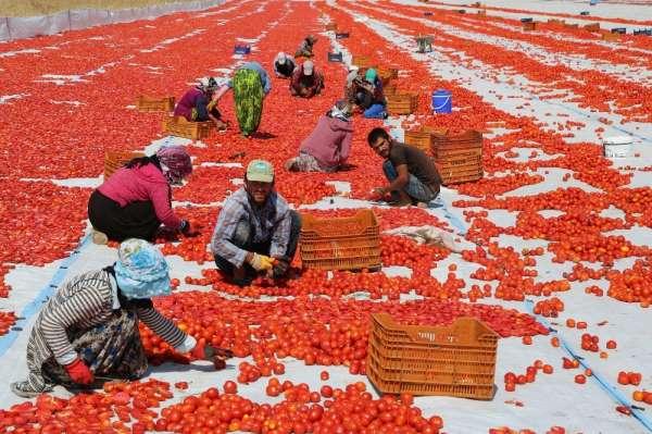 Tunceli'den Avrupa'ya kuru domates ihracatı
