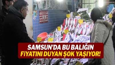 Samsun'da bu balığın fiyatını duyan şok yaşıyor!
