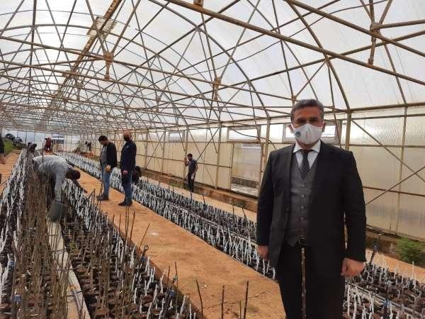Bingölde ilk kez ceviz ve badem aşılı fidan üretimine geçildi