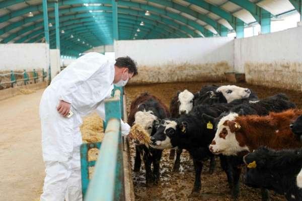 Kardeş ülke Azerbaycana Eskişehirden canlı hayvan ihracatı