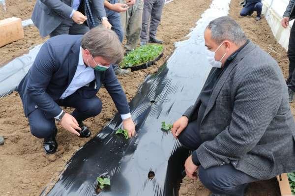 İç Anadolunun Çukurovasında devlet desteğiyle üretim artarak sürüyor