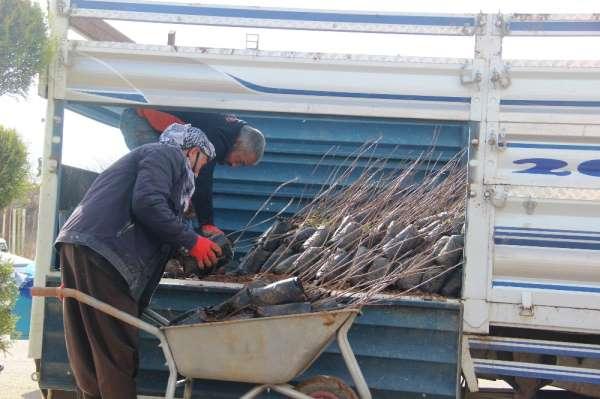 Şanlıurfada yeni yılda fıstık fidanı satışları iki katına çıktı