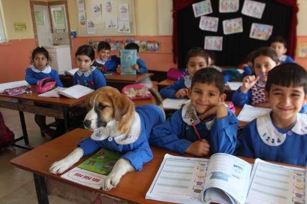 Önlük giydirilen yavru köpek okulun maskotu oldu