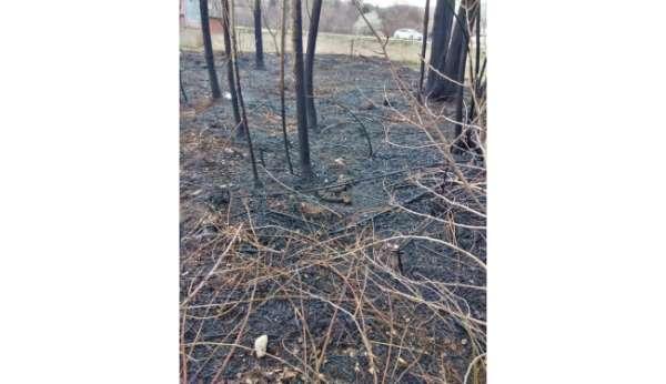 Amasyada ağaçlık alandaki yangında 5 yavru köpek ve bir kaplumbağa telef oldu