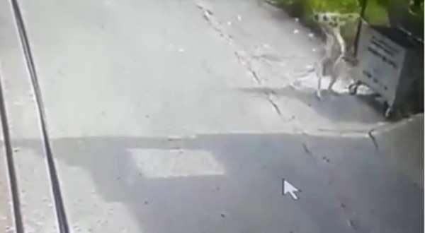 Köpeğin saldırısına uğrayan kedi telef oldu