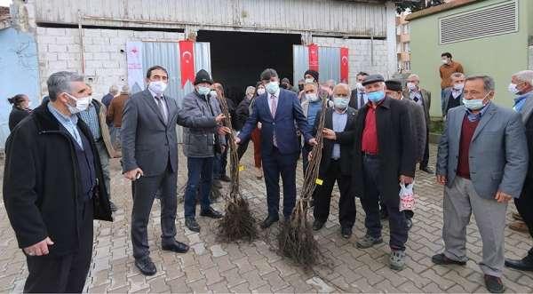 Osmaniyede çiftçilere ceviz fidanı dağıtıldı