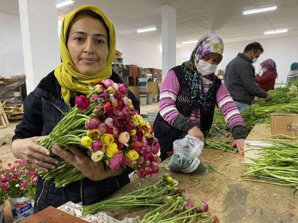 (ÖZEL) Cebinde getirdiği hediye tohumla Antalyada üretime başladı, taleplere yetişemiyor