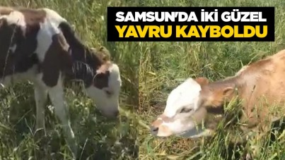 Samsun'da iki güzel yavru kayboldu