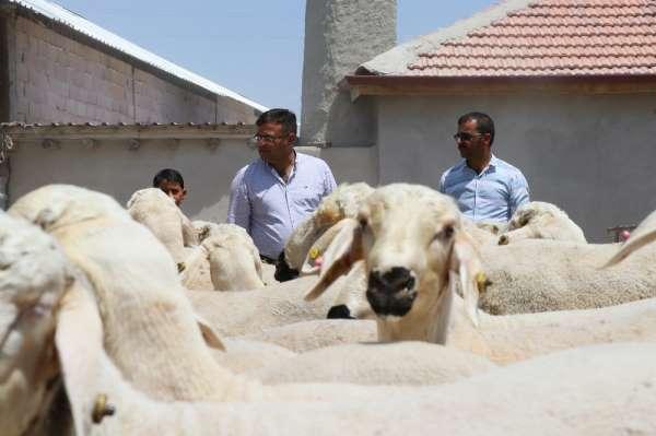 Aksaray'da kurbanlık satışlarında küçükbaş hayvan tercih ediliyor