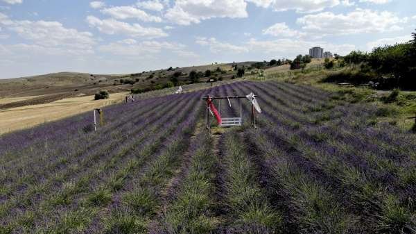 Fransadan gelirken getirdiği 1 avuç tohumla kendi işini kurdu