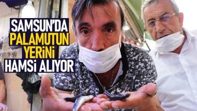 Samsun'da tezgahlarda hamsi yerini alıyor