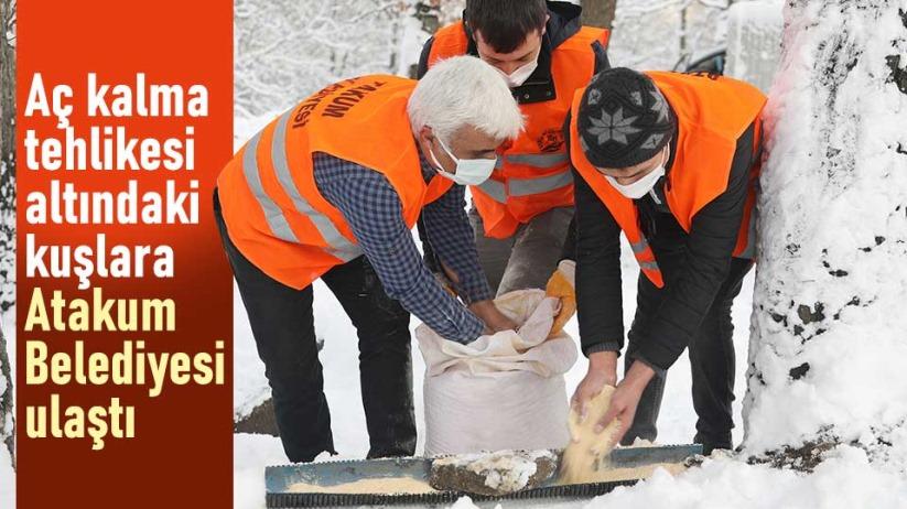 Aç kalma tehlikesi altındaki kuşlara Atakum Belediyesi ulaştı