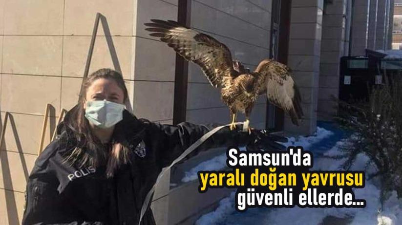 Samsun'da yaralı doğan yavrusu güvenli ellerde