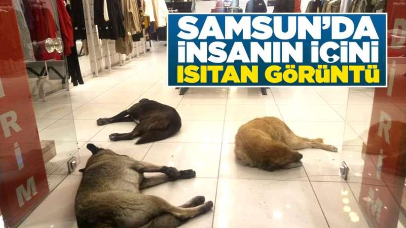 Samsunda üşüyen köpekler mağazaya sığındı