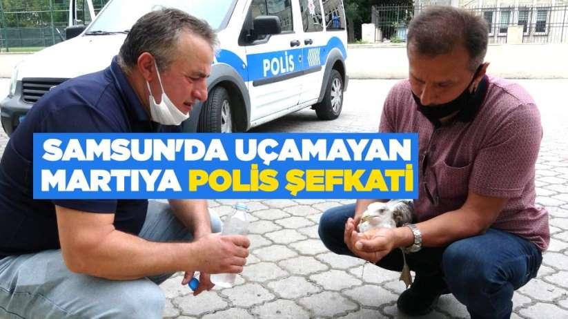 Samsun'da uçamayan martıya polis şefkati