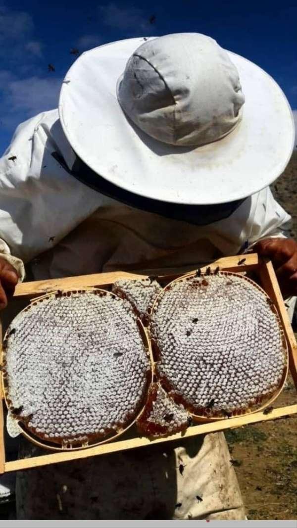 2 bin 973 rakımlı Mereto Dağında bal üretimi