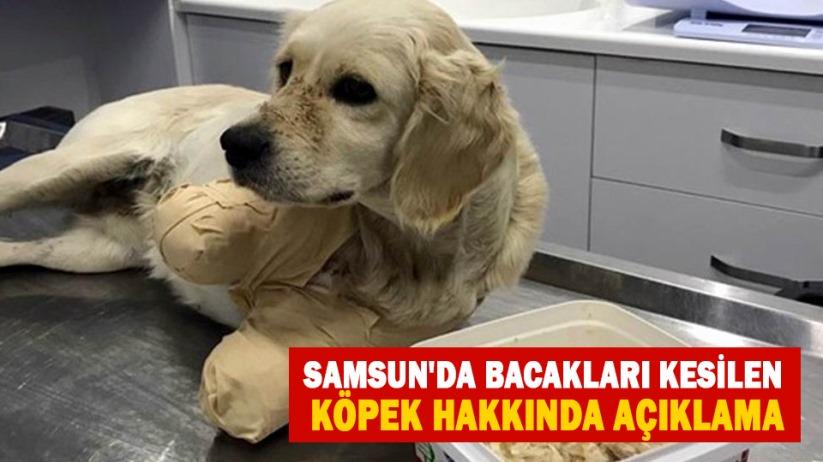 Samsun'da bacakları kesilen köpek hakkında açıklama