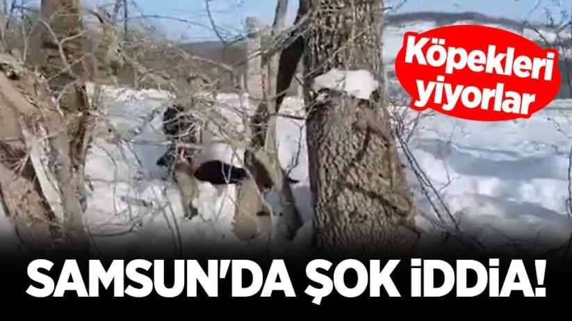 Samsun'da şok iddia! Köpekleri yiyorlar