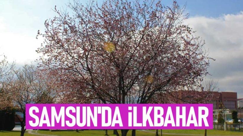 Samsunda ilkbahar