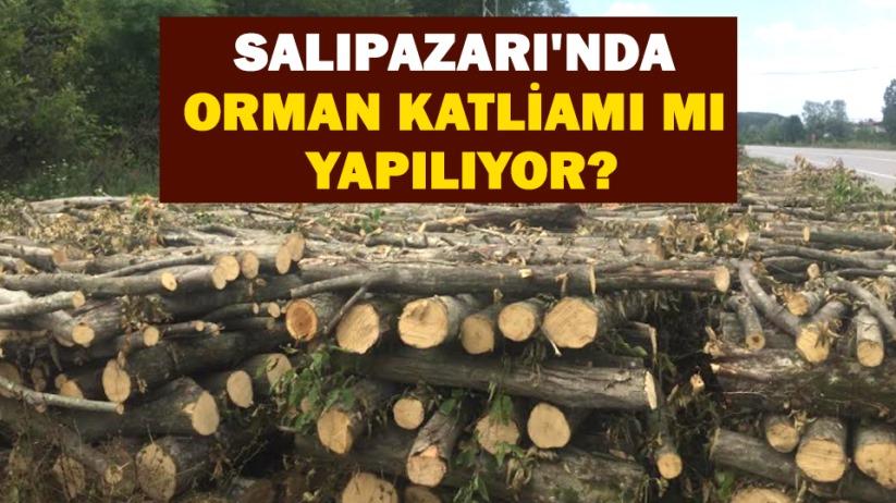 Salıpazarında Orman Katliamı mı Yapılıyor?