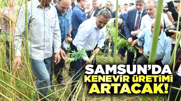Samsun'da kenevir üretimi artacak