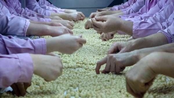 Sevinç: 'Korona'ya rağmen fındık ihracatında azalma yok'